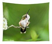 Hummingbird Flexibility Tapestry