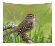 immature White-crowned Sparrow Tapestry
