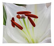 Lily Casa Blanca 3 Tapestry