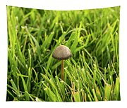 Lonely Little Mushroom Floating On The Grass Tapestry