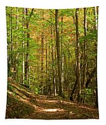 Meigs Creek Trailhead In Smoky Mountains National Park Tapestry