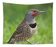 Northern Flicker, Sacramento County California Tapestry