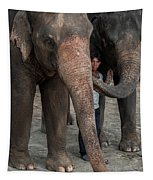 One Man, Two Elephants Tapestry