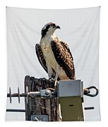 Osprey On A Post Tapestry by Matthew Nelson