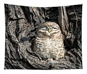Owl In A Tree Tapestry