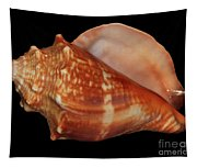 Painted Shell No. 9 Tapestry