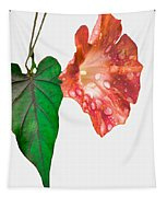 Peach Morning Glory Tapestry