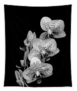 Phalaenopsis Orchids Black And White Tapestry