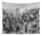 Pinsapos Into The Woods. Bw. Foggy Sunrise Tapestry