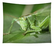 Portrait Of A Great Green Bush-cricket Sitting On A Leaf Tapestry
