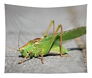 Portrait Of A Great Green Bush-cricket Sitting On The Pavement Tapestry