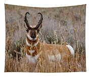 Pronghorn In The Sage Tapestry