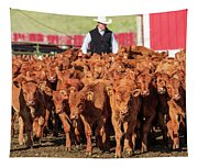 Red Angus Calves Tapestry