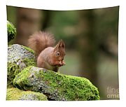 Red Squirrel Sciurus Vulgaris Eating A Seed On A Stone Wall Tapestry