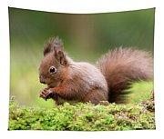 Red Squirrel Sciurus Vulgaris Tapestry