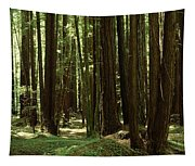 Redwood Trees Armstrong Redwoods St Tapestry
