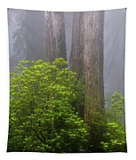 Redwoods By Crescent City 7 Tapestry