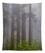 Redwoods By Crescent City 8 Tapestry