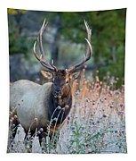 Rocky Mountain Wildlife Bull Elk Sunrise Tapestry by Nathan Bush