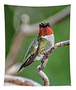 Ruby-throated Hummingbird In All His Glory Tapestry