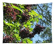 Sambucus Elderberry Sureau Tapestry