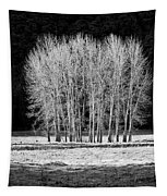 Silver Trees, Yosemite National Park Tapestry