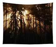 Sultry Morning Radiance Tapestry
