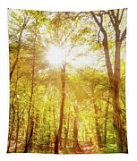 Sunbeams In The Forest Tapestry