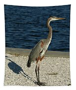 Tricolored Heron Portrait  Tapestry