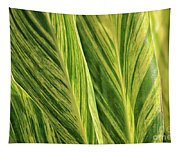 Variegated Shell Ginger Tapestry