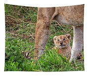 What Could Be Cuter Than A Baby Lion Cub? Tapestry