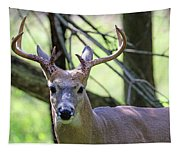 White Tailed Buck Portrait I Tapestry