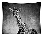 Young Giraffe Black And White Tapestry