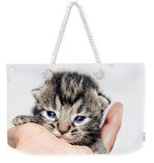Kitten In A Hand Weekender Tote Bag