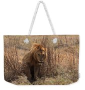 Lions Of The Ngorongoro Crater Weekender Tote Bag