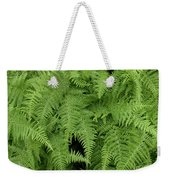 Mountain Ferns Of North Carolina Weekender Tote Bag