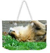 001 Lazy Boy At The Buffalo Zoo Weekender Tote Bag