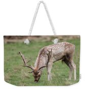 01 Fallow Deer Weekender Tote Bag