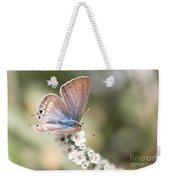 02 Long-tailed Blue Butterfly Weekender Tote Bag