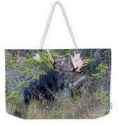 0339 Bull Moose 3 Weekender Tote Bag