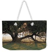 A Tree In Mississippi Weekender Tote Bag