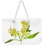 Alstroemeria Flowers Against White Weekender Tote Bag