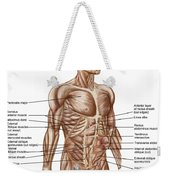 Anatomy Of Human Abdominal Muscles Weekender Tote Bag