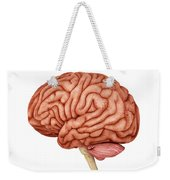 Anatomy Of Human Brain, Side View Weekender Tote Bag