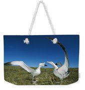 Antipodean Albatross Courtship Display Weekender Tote Bag by Tui De Roy