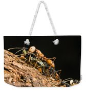 Army Ant Carrying Cricket La Selva Weekender Tote Bag