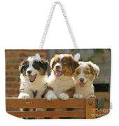 Australian Sheepdog Puppies Weekender Tote Bag