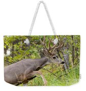 Beautiful Mule Deer Buck With Velvet Antler  Weekender Tote Bag