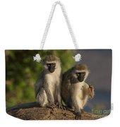 Black-faced Vervet Monkey Weekender Tote Bag