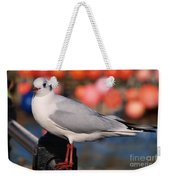 Black-headed Gull Weekender Tote Bag